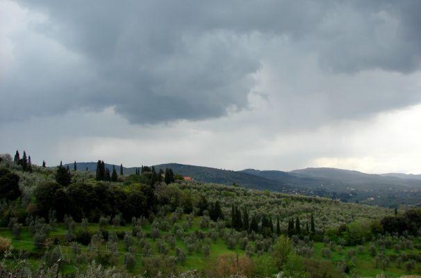 Вилла Гамберайя. Вид на Оливковые рощи